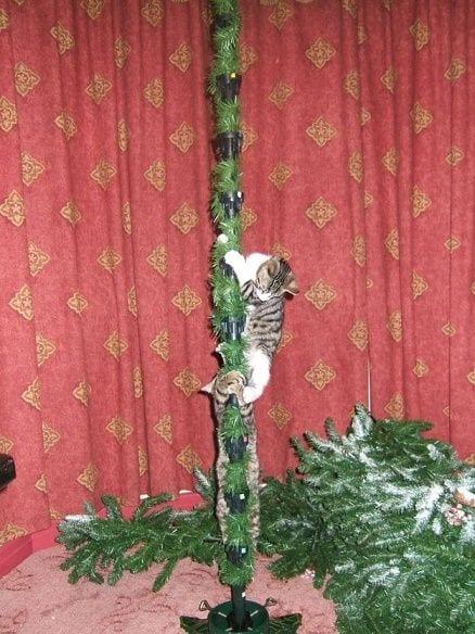 animales-navidad16