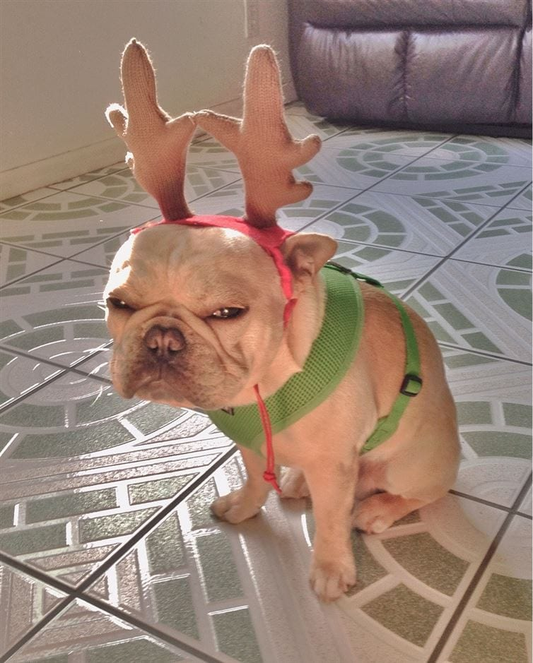 animales-navidad19