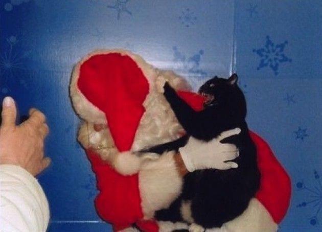 animales navidad22