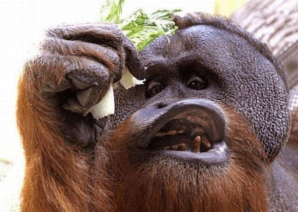 animales_que_no_estaban_listos_para_la_foto_20