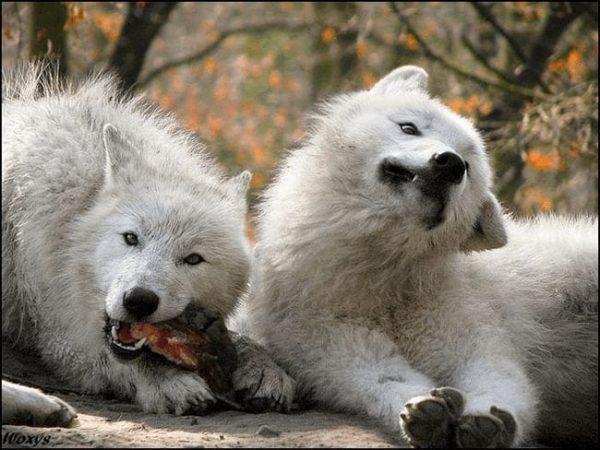 animales_que_no_estaban_listos_para_la_foto_29
