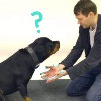 magia perros