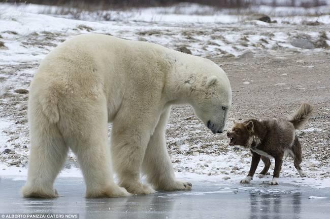 oso-polar-y-perro-1