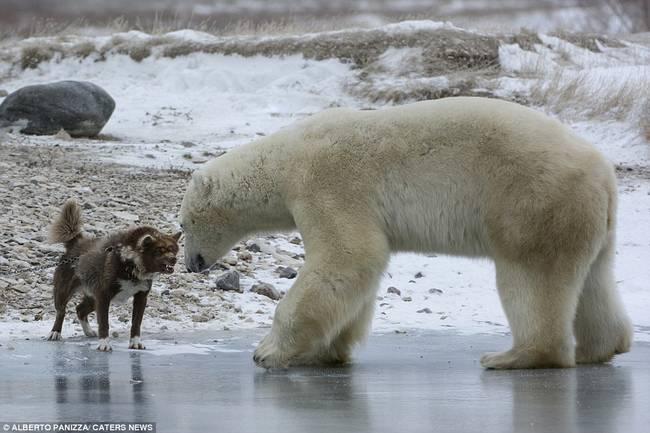 oso-polar-y-perro-2