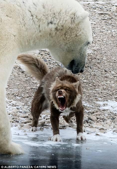 oso-polar-y-perro-4