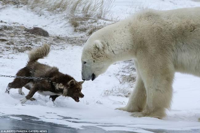 oso-polar-y-perro-5