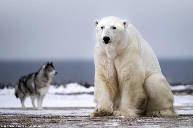 oso-polar-y-perro-7