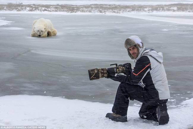 oso-polar-y-perro-8