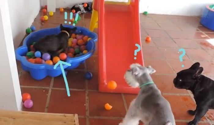 piscina bolas perro