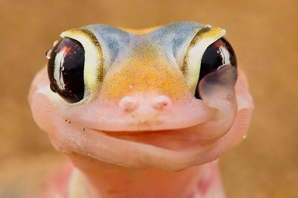 reptiles_adorables_1