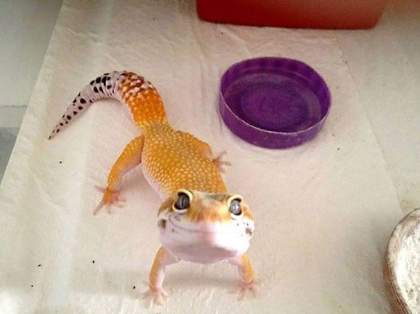 reptiles_adorables_14