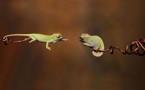 reptiles_adorables_2
