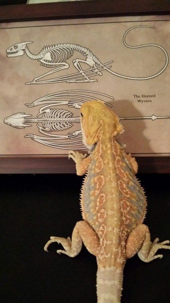 reptiles_adorables_21