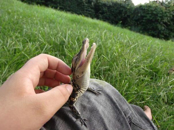 reptiles adorables 4