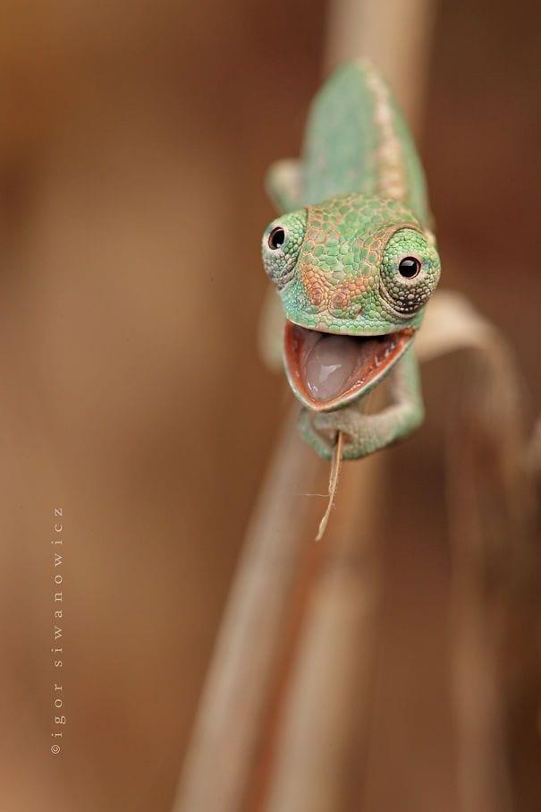 reptiles_adorables_7
