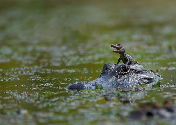 reptiles_adorables_8
