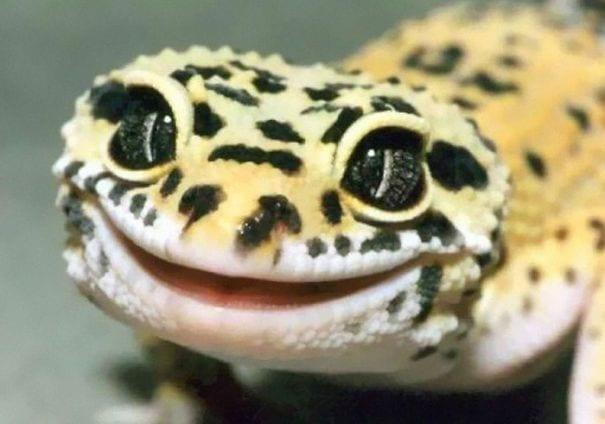 reptiles_adorables_9