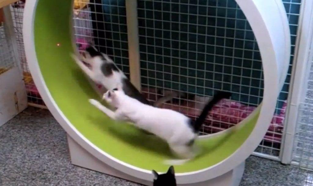 rueda gatos