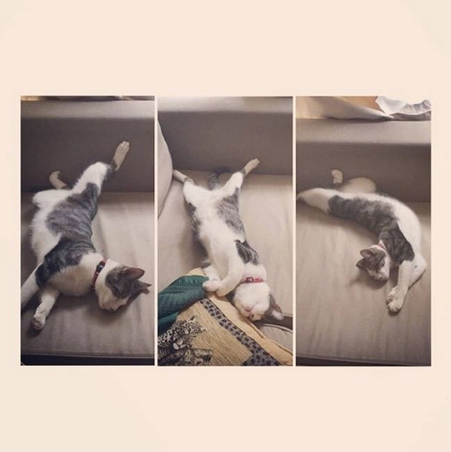 animales-yoga