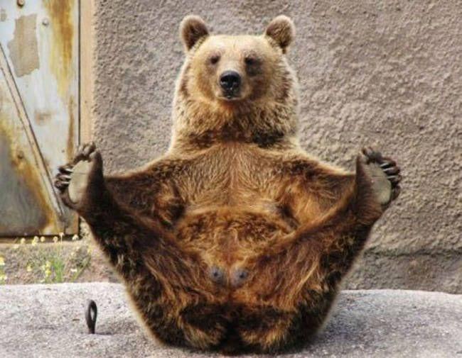 animales-yoga03