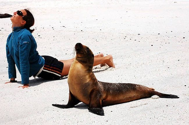 animales-yoga11