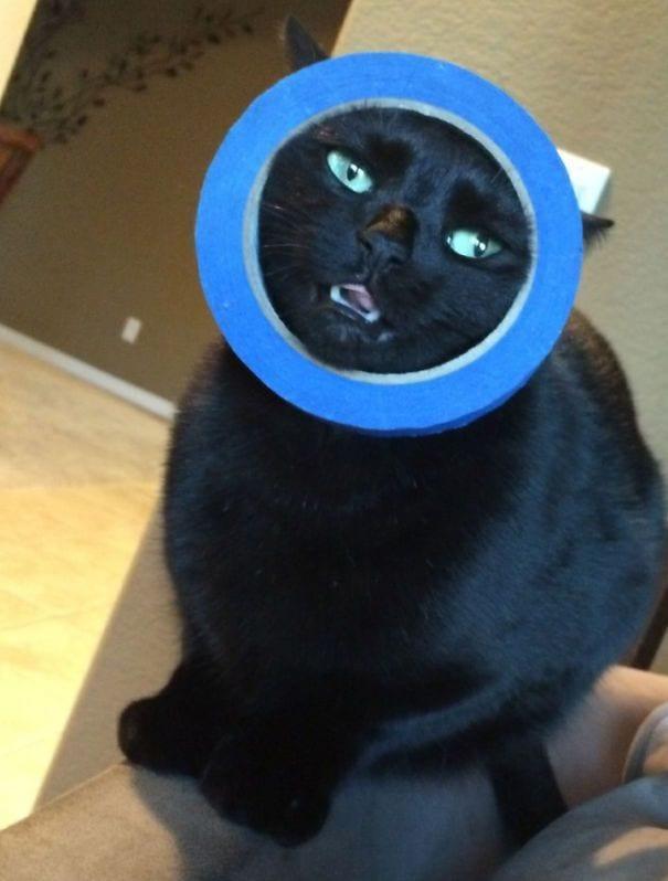 cat-logic-funny-34__605