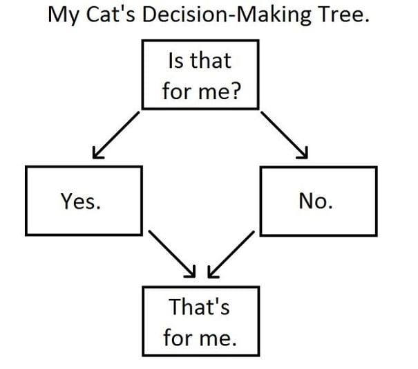 divertida logica felina 16