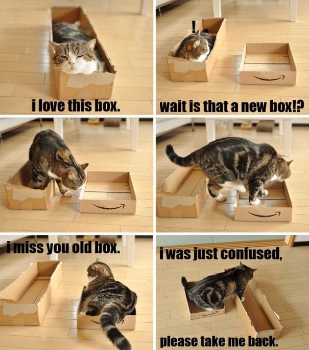 divertida logica felina 21