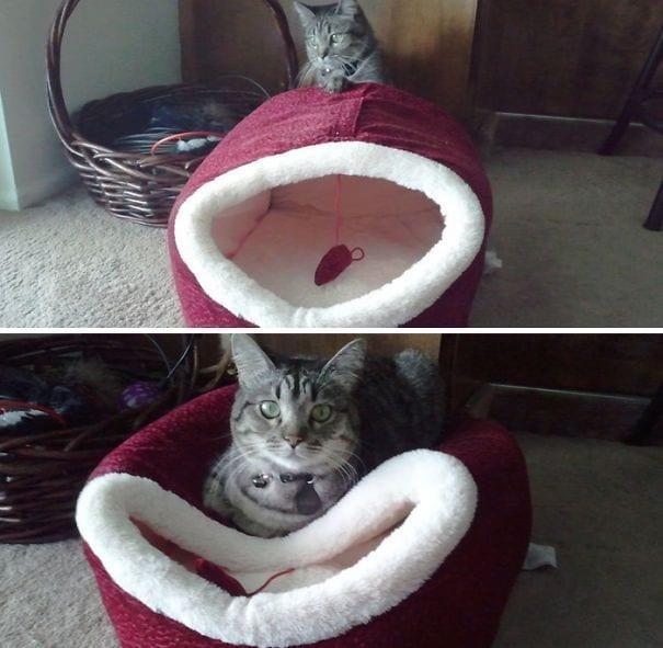divertida logica felina 3