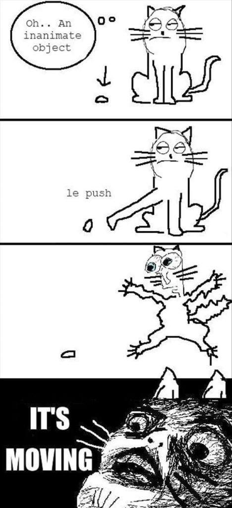 divertida logica felina 6