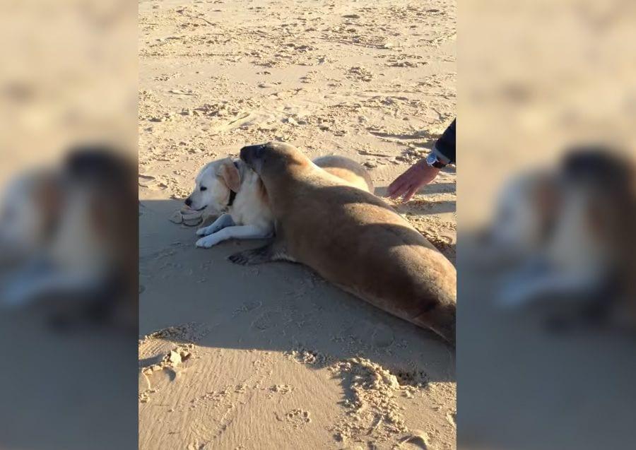 perro foca
