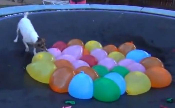 perro globos agua
