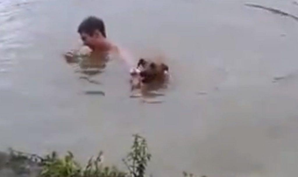 perro rescate