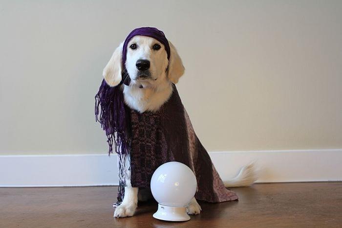 perros predicen destacada