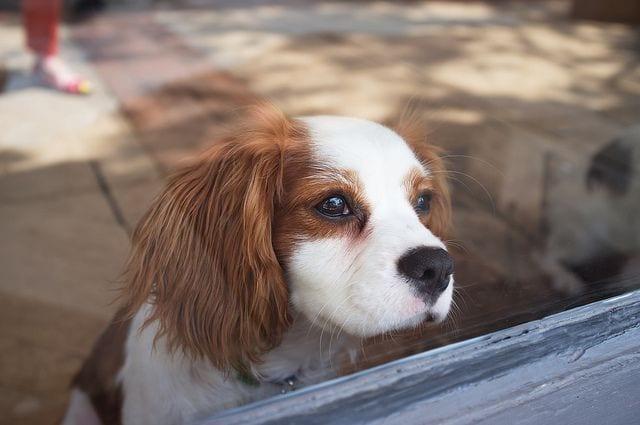 perros-predicen07