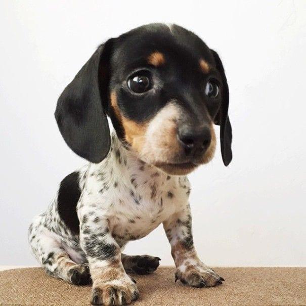 perros_2