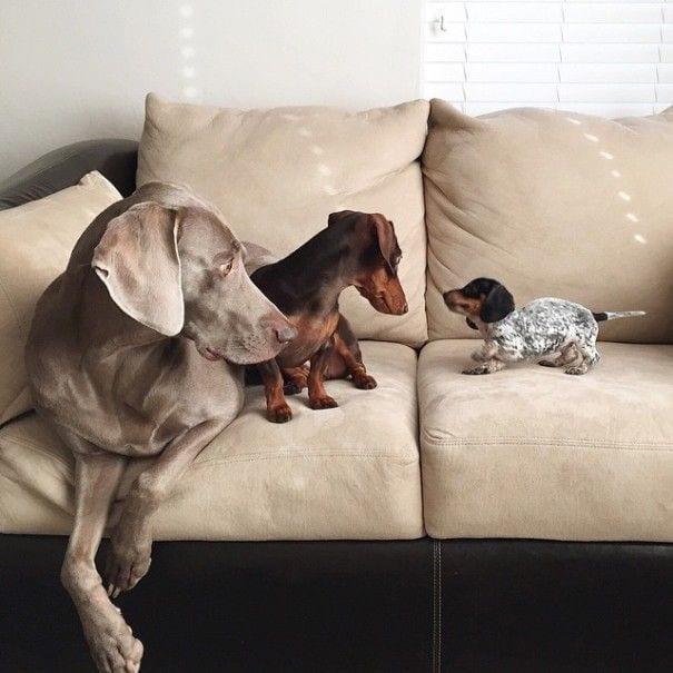 perros_3