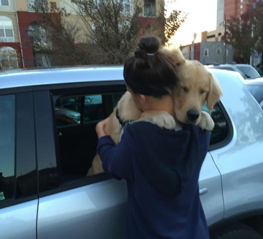 amamos-perros09