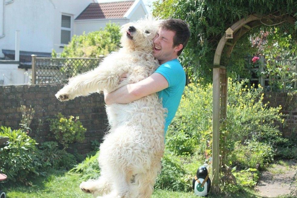 amamos-perros14
