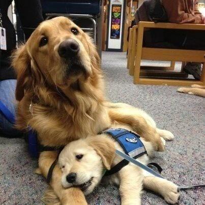 amamos-perros16