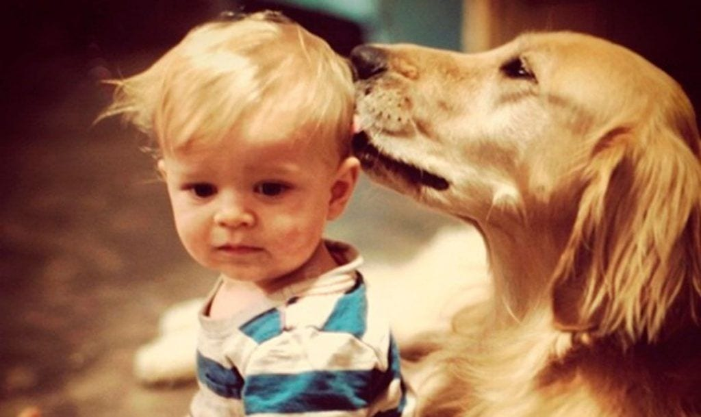 amor perros