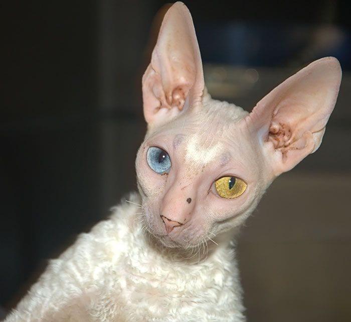animales-ojos-raros1