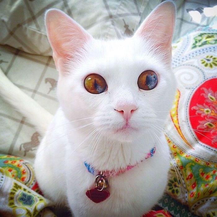 animales-ojos-raros11