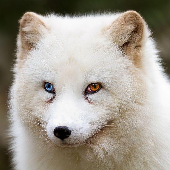 animales-ojos-raros12