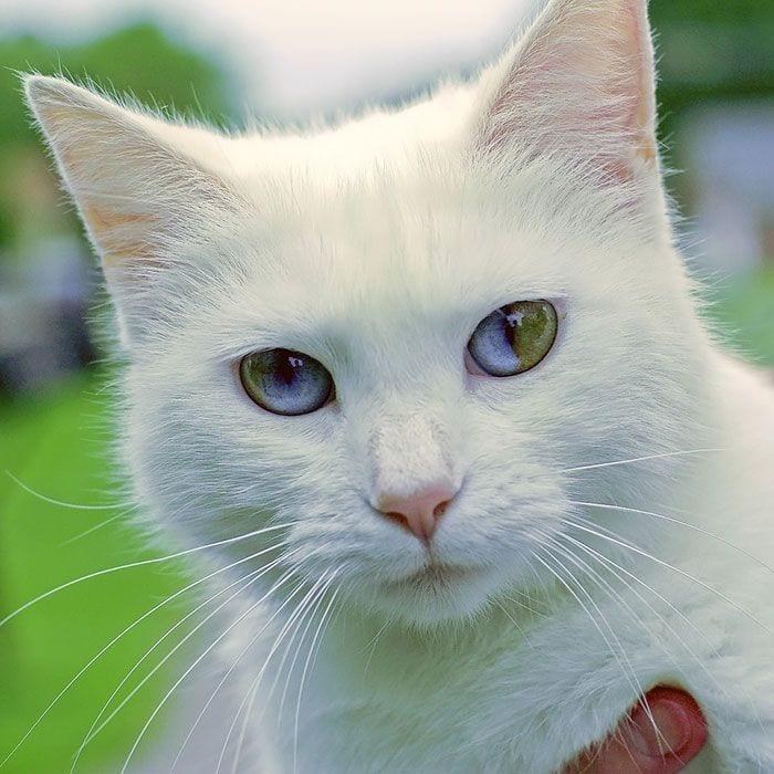 animales-ojos-raros14