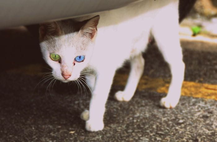 animales ojos raros2