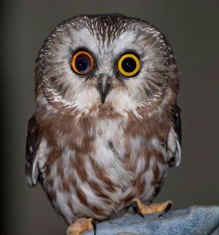 animales-ojos-raros5