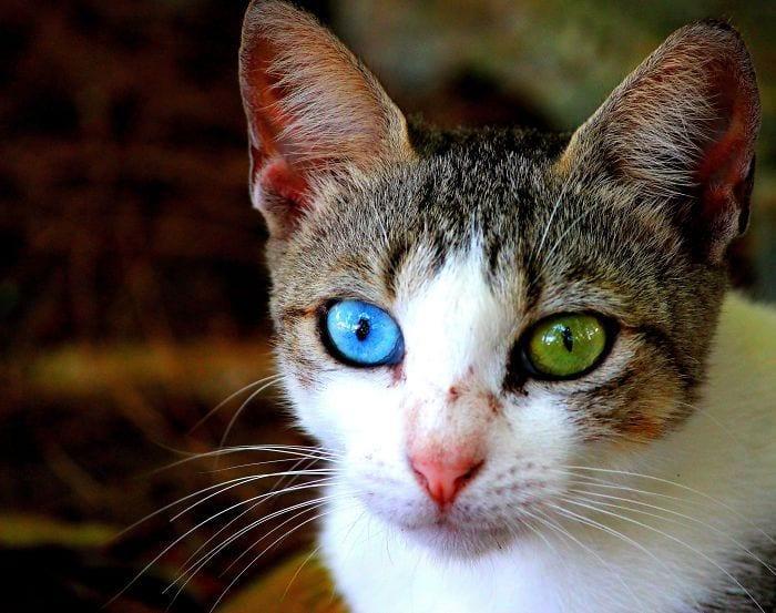 animales-ojos-raros7
