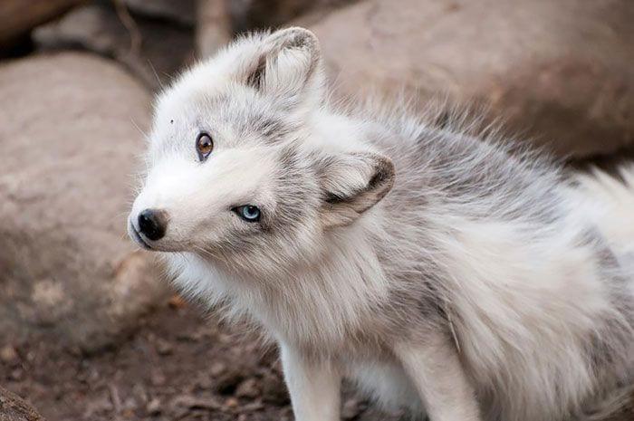 animales-ojos-raros8