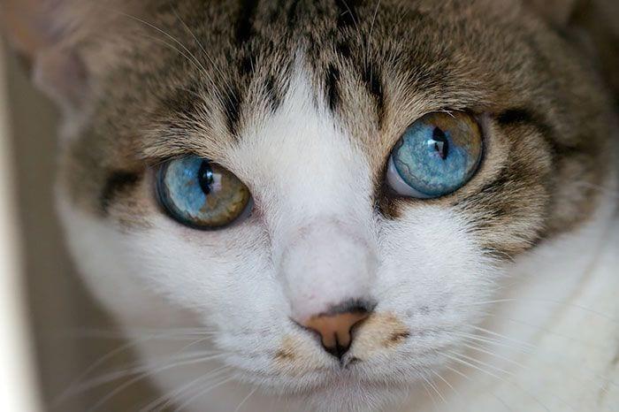 animales-ojos-raros9